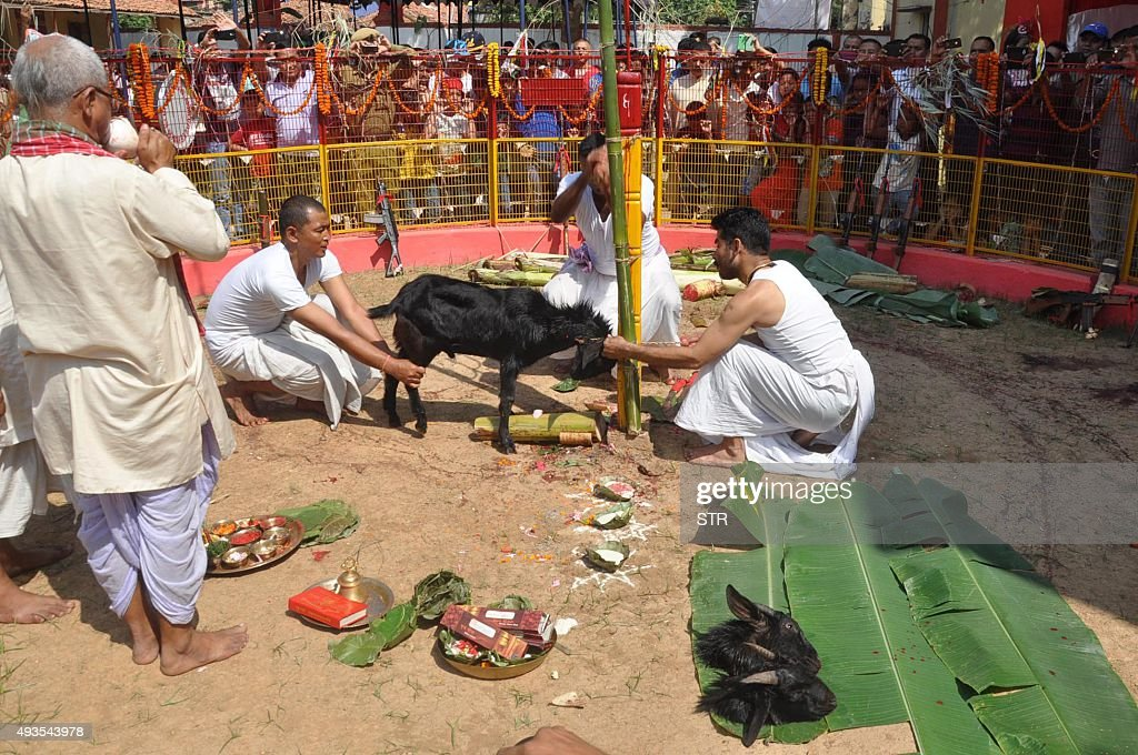 Jharkhand Armed Police personnel dressed as priests perform 'Bali' as they sacrifice a goat in an arena with their weapons and ammunition on the...