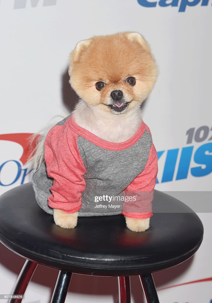 Jiff the Dog attends 102.7 KIIS FM's Jingle Ball 2016 at Staples Center on December 2, 2016 in Los Angeles, California.