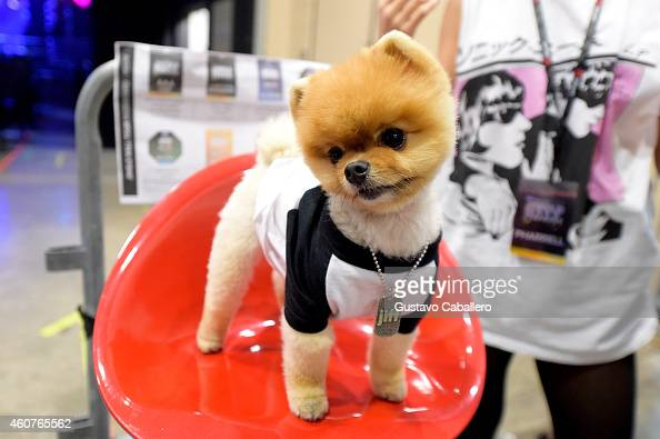 Jiff the Pomeranian attends Y100's Jingle Ball 2014 at BBT Center on December 21 2014 in Miami FL