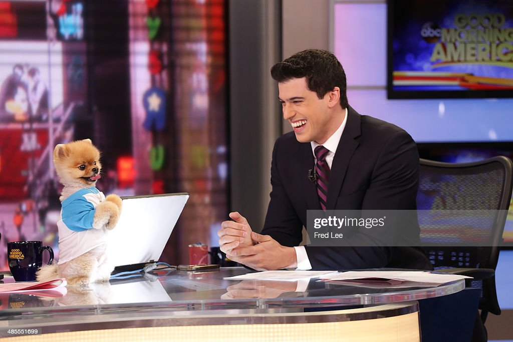 AMERICA Jiff the pomeranian on 'Good Morning America' 4/1/14 on the ABC the Television Network