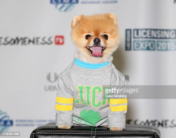 Jiff the world's fastest dog on two paws attends the Licensing Expo 2015 at the Mandalay Bay Convention Center on June 9 2015 in Las Vegas Nevada