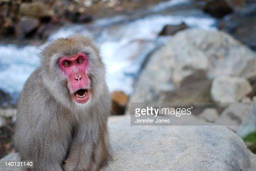 Jigokudani snow monkey