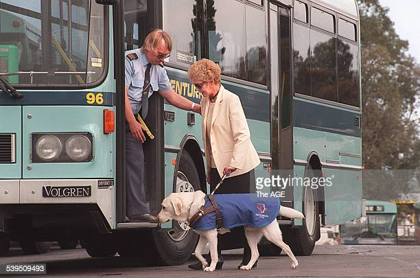Joan Smith and her guide dog are assisted onto the bus by driver Jerry Van Zanten 11 November 1997 THE AGE Picture by WAYNE TAYLOR