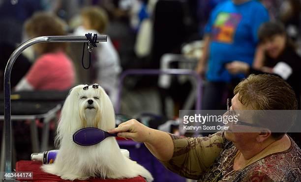 Colorado Kennel Club Dog Show