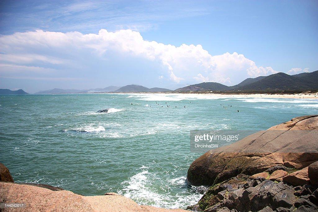 Joaquina beach : Stock Photo