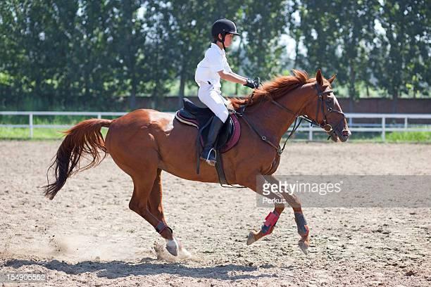 jockey et cheval en été
