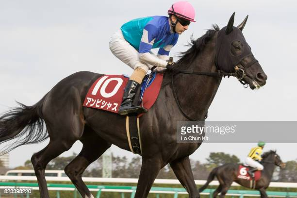 Jockey Christophe Lemaire riding Ambitious during the Race 11 Nakayama Kinen at Nakayama Racecourse on February 28 2016 in Funabashi Chiba Japan