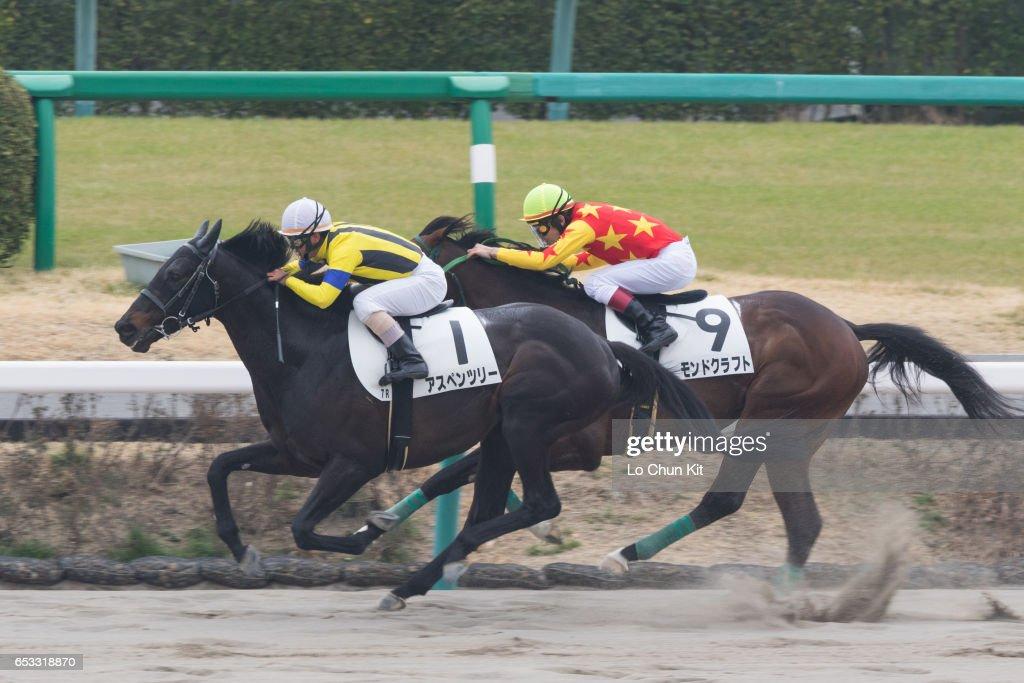 Jockey Katsuharu Tanaka riding Aspen Tree wins the Race 7 at Nakayama Racecourse on March 6, 2016 in Funabashi, Chiba, Japan.