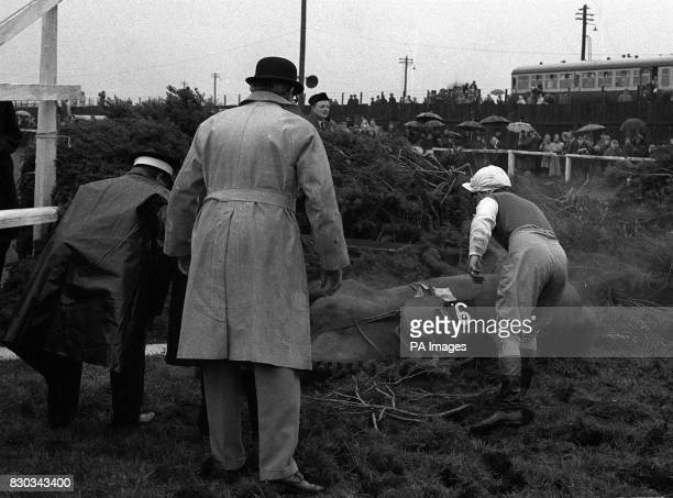 Jockey P Buckley calls for help for his mount Lime King after the great pileup at the fence after Becher's Brook in the 1967 Grand National at...