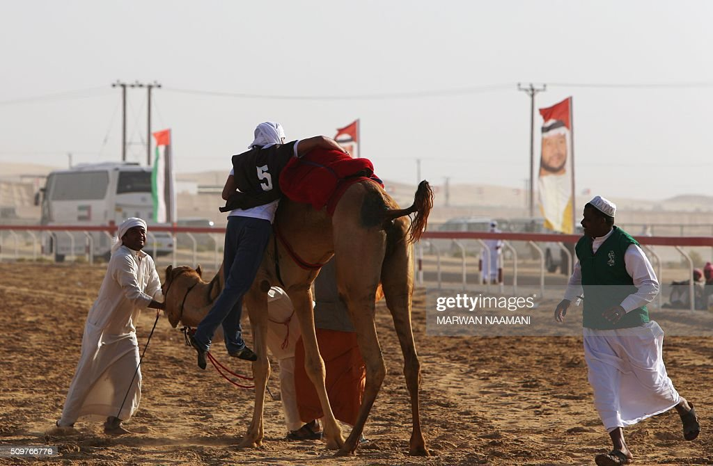 A jockey rides his camel after falling during the Sheikh Sultan Bin Zayed al-Nahyan herithe festival, held at the Shweihan racecourse in Al-Ain, on the outskirts of Abu Dhabi, on February 12, 2016. The festival includes a camel beauty contest, a traditional souq, a camel auction, and competitions for traditional handicrafts. / AFP / MARWAN NAAMANI