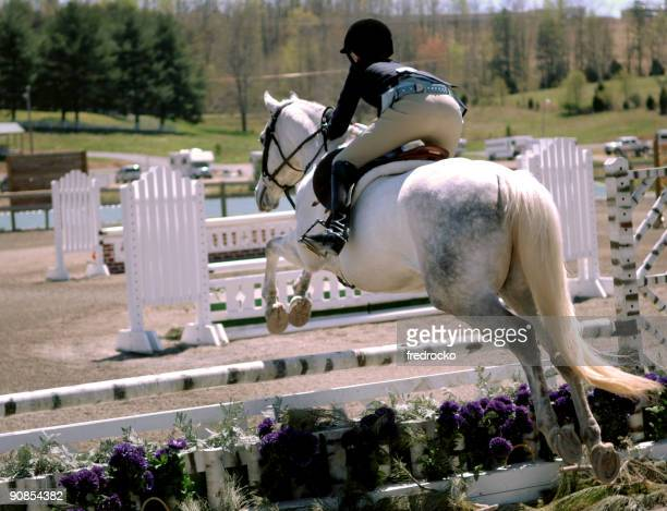 Jockey riding a white horse around an obstacle course