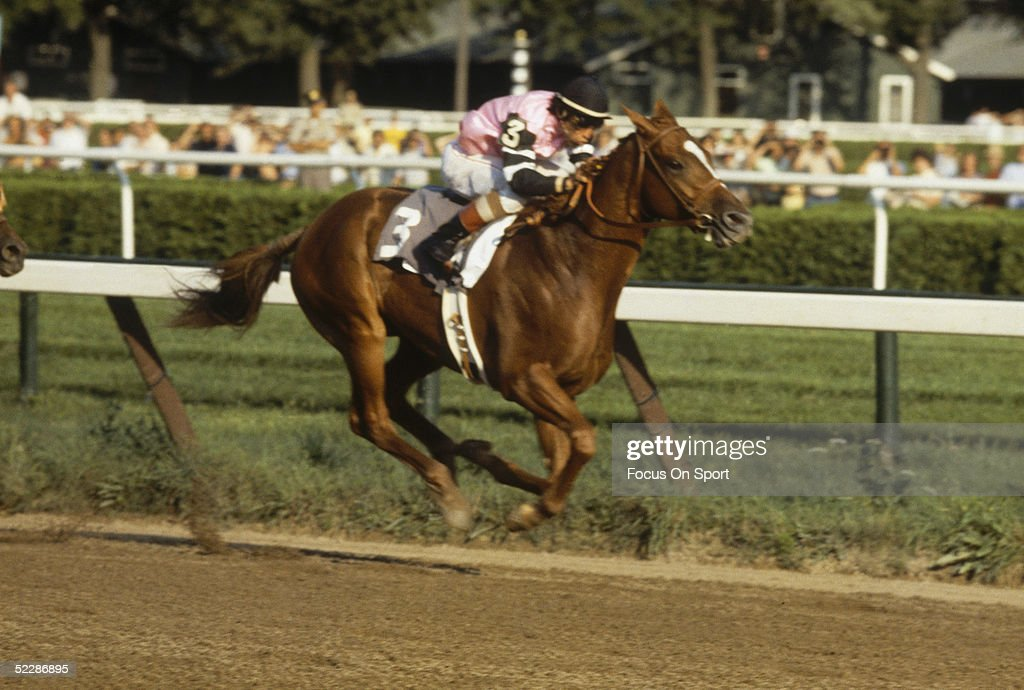 Jockey Steve Cauthen rides on Affirmed who takes the lead during the Belmont Stakes on June 10 1978 to win the Triple Crown at Belmont Park in...