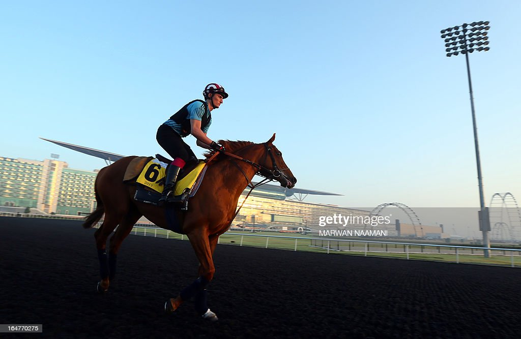 A jockey trains French Fifteen of France on March 28, 2013 ahead of the March 30 Dubai World Cup, the world's richest horse race with a prize money of 10 million US dollars, at the Meydan race track in the Gulf emirate.