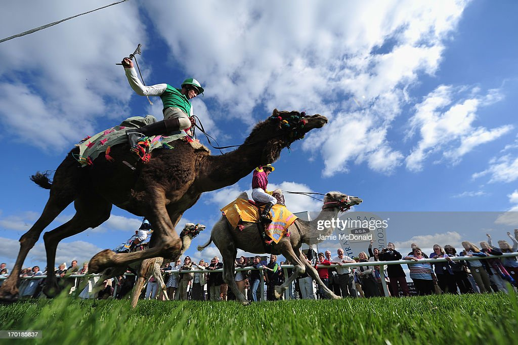 Jockeys and camels race during racing at Stratford-upon-Avon racecourse on June 8, 2013 in Stratford-upon-Avon, England.