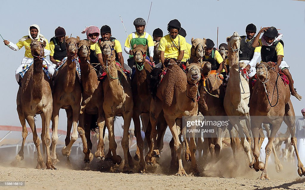 Jockeys compete during the Mazayin Dhafra Camel Festival, on December 21, 2012 near the city of Madinat Zayed, 150 kms west of Abu Dhabi. The festival, which attracts participants from around the Gulf region, includes a camel beauty contest, a display of UAE handcrafts and other activities aimed at promoting the country's folklore . AFP PHOTO/KARIM SAHIB