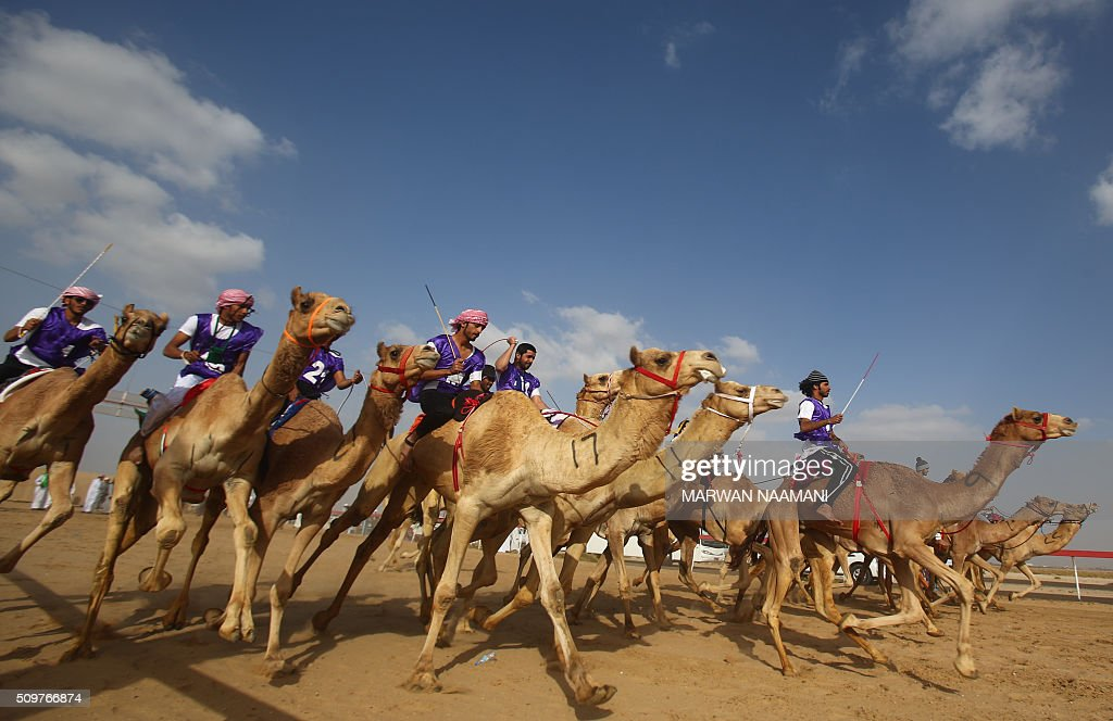 Jockeys compete in a camel race during the Sheikh Sultan Bin Zayed al-Nahyan herithe festival, held at the Shweihan racecourse in Al-Ain, on the outskirts of Abu Dhabi, on February 12, 2016. The festival includes a camel beauty contest, a traditional souq, a camel auction, and competitions for traditional handicrafts. / AFP / MARWAN NAAMANI