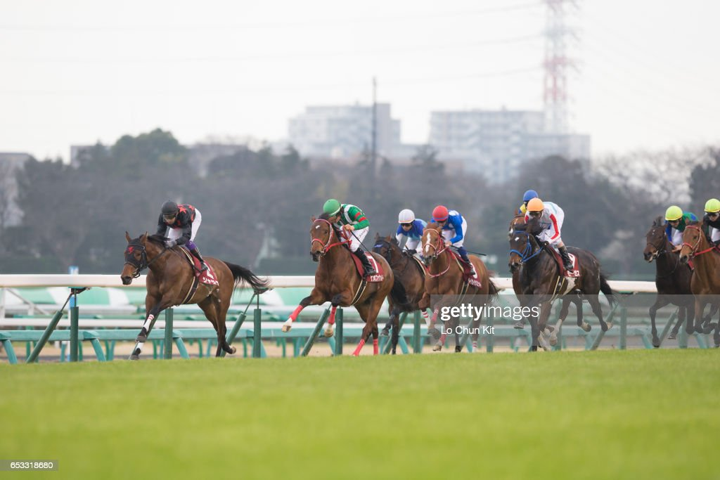 Jockeys compete the Race 11 Yayoi Sho - Japanese 2000 Guineas Trial (G2 2000m) at Nakayama Racecourse on March 6, 2016 in Funabashi, Chiba, Japan.