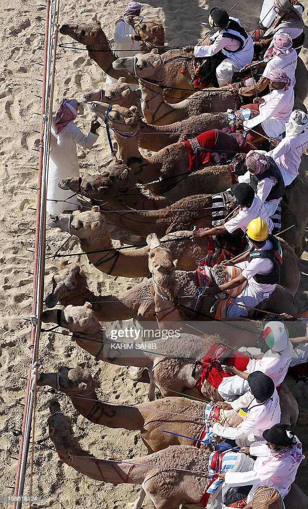 Jockeys hold camels steady at the starting line during the Mazayin Dhafra Camel Festival, on December 21, 2012 near the city of Madinat Zayed, 150 kms west of Abu Dhabi. The festival, which attracts participants from around the Gulf region, includes a camel beauty contest, a display of UAE handcrafts and other activities aimed at promoting the country's folklore .