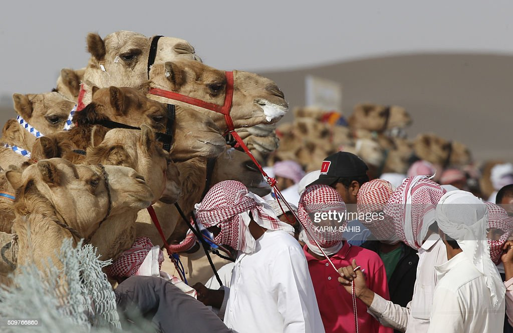 Jockeys prepare to compete in a camel race during the Sheikh Sultan Bin Zayed al-Nahyan herithe festival, held at the Shweihan racecourse in Al-Ain, on the outskirts of Abu Dhabi, on February 12, 2016. The festival includes a camel beauty contest, a traditional souq, a camel auction, and competitions for traditional handicrafts. / AFP / KARIM SAHIB