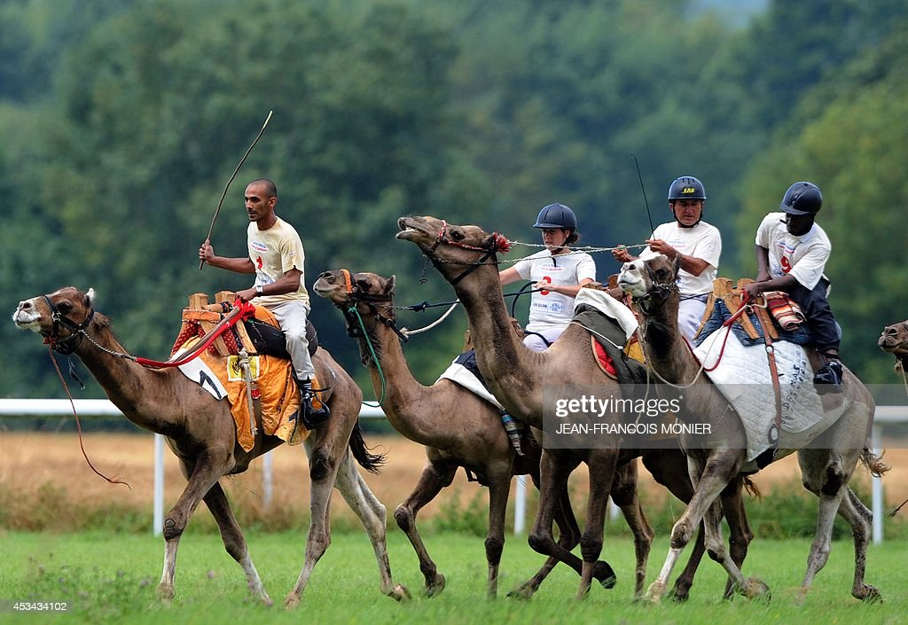 Jockeys ride camels during a French Cup of camel races on August 10, 2014 on the horserace track of La Chartre-sur-le-Loir, western France. Unusual in these latitudes, eight dromaderies that have never seen the desert, took part in two races of 1000 meters. AFP PHOTO / JEAN-FRANCOIS MONIER