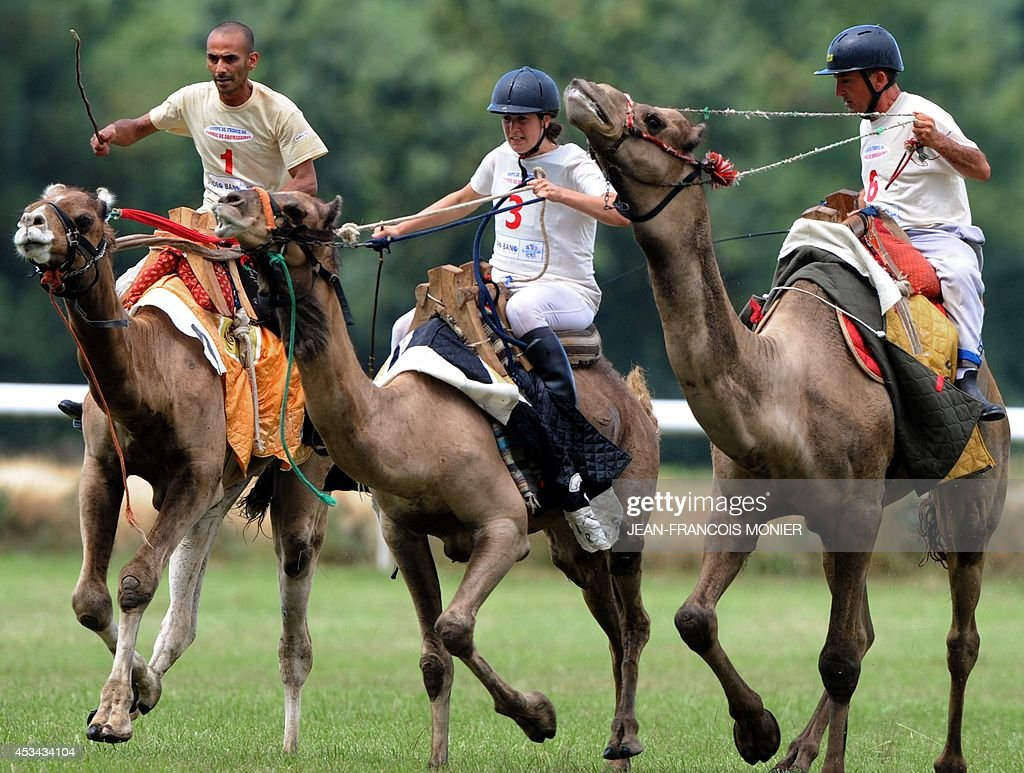 Jockeys ride camels during a French Cup of camel races on August 10, 2014 on the horserace track of La Chartre-sur-le-Loir, western France. Unusual in these latitudes, eight dromaderies that have never seen the desert, took part in two races of 1000 meters.