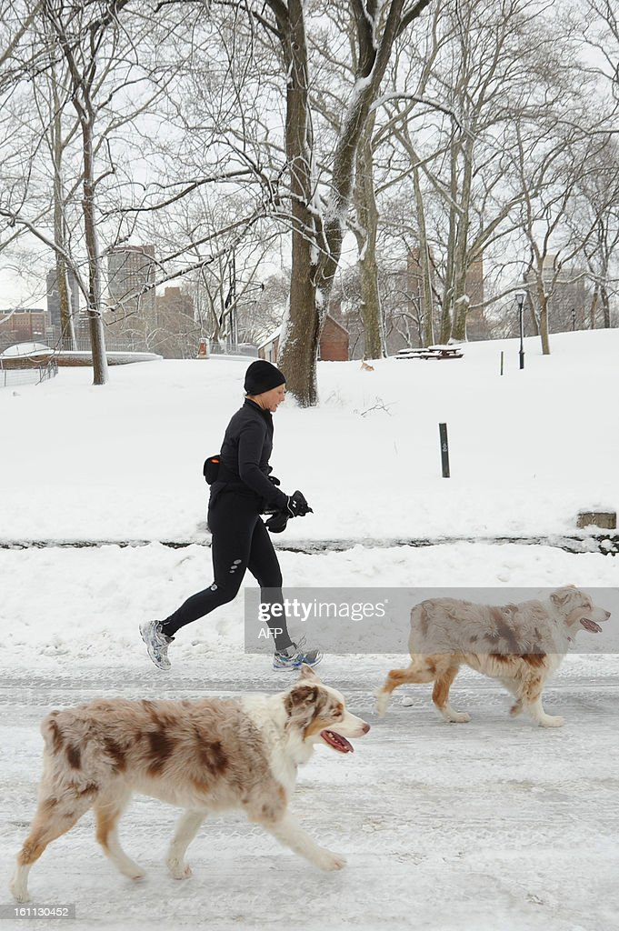 A jogger with her dogs in Central Park brave the weather after winter storm Nemo New York City with 4 to 8 inches (10-20cms) of snow on February 9, 2013. The storm was forecast to bring the heaviest snow to the densely-populated northeast corridor so far this winter, threatening power and transport links for tens of millions of people and the major cities of Boston and New York. New York and other regional airports saw more than 4,500 cancellations ahead of what the National Weather Service called 'a major winter storm with blizzard conditions' along most of the region's coastline.