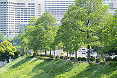 Joggers around imperial palace, Tokyo Prefecture, Honshu, Japan