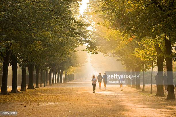 Joggers in tree lined avenue