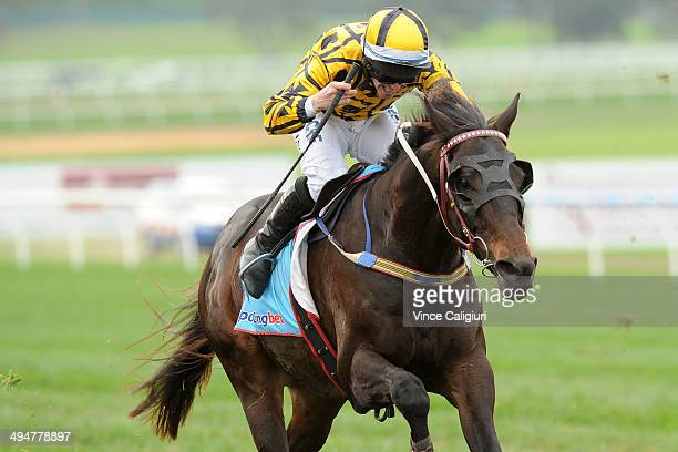 John Allen riding Gotta Take Care winning Race 4 The Australian Hurdle during Melbourne Racing at Sandown Lakeside on May 31 2014 in Melbourne...