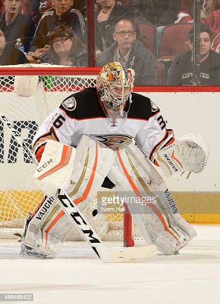 John Gibson of the Anaheim Ducks gets ready to make a save against the Arizona Coyotes at Gila River Arena on November 25 2015 in Glendale Arizona