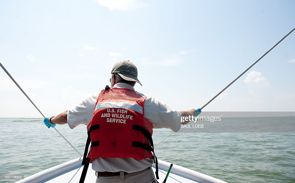 John Gill, a biologist from the US Fish and Wildlife Service, looks out over the water as he searches for birds covered with oil from the BP Deepwater Horizon oil spill, at Empire Jetty in the Gulf of Mexico, near Venice, Louisiana, June 15, 2010. Birds are caught and then cleaned at the Fort Jackson Oiled Wildlife Rehabilitation Center. AFP PHOTO / Saul LOEB