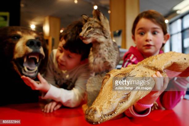 John Hasford aged 7 pictured with a black bear's head a bobcat's head and Aisling Brennan with a baby crocodile seized by the Customs Service an...