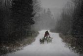 John Huston drives a 400 pound dogsled through the woods near Ely Minnesota December 14 2006 Huston a polar adventurer and dog musher is preparing...