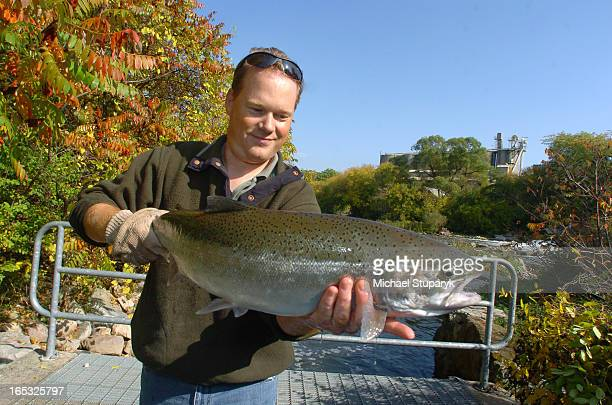 TORONTO ONT John Kendall President of Credit River Anglers Assoc holding and then releasing a 5 yr old female Rainbow Trout at Streetsville Fishway...