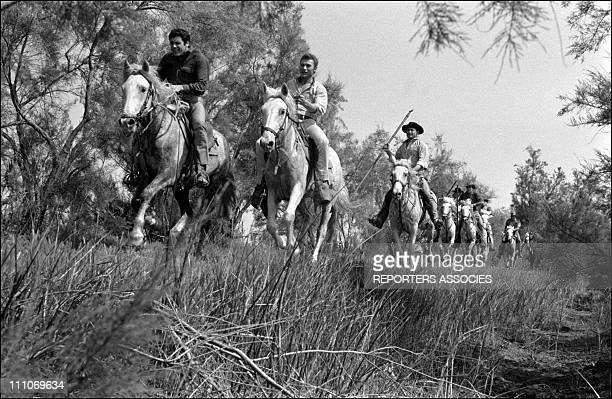 Johnny Hallyday in the sixties in France Johnny Hallyday riding a horse in France on May 25 1963