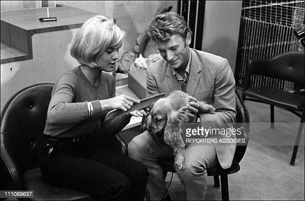 Johnny Hallyday in the sixties in FranceSylvie Vartan and Johnny Hallyday with a dog at Orly airport in France on October 15 1963