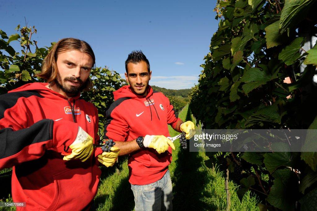 SC Freiburg Attends Grape Gathering