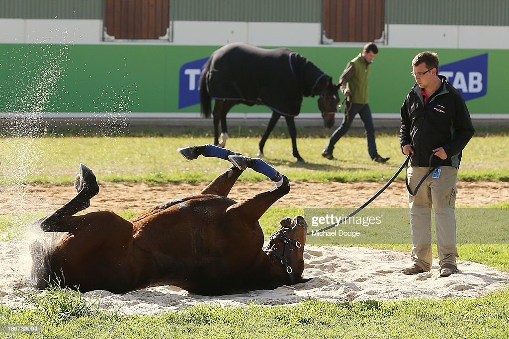 Jonathan Pissani watches Voluese De Coeurs roll in the sand during trackwork ahead of the Melbourne Cup at Werribee Racecourse on November 4, 2013 in Melbourne, Australia.