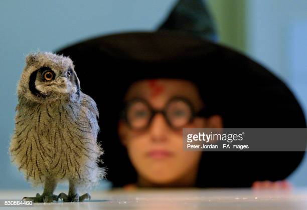 Jonny Rose year 6 of Calton Primary School north London with one of three baby owlets who's mother died shortly after they were born at London Zoo in...