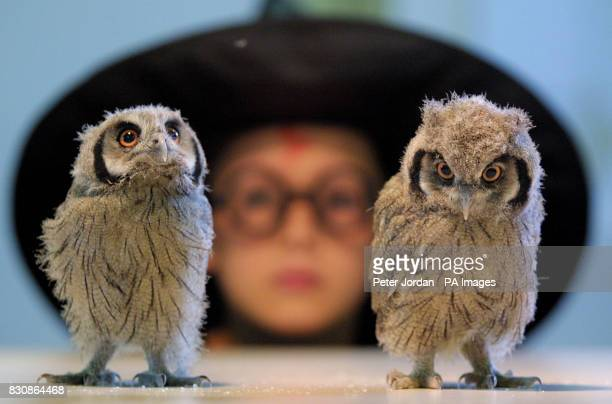 Jonny Rose year 6 of Calton Primary School north London with two of three baby owlets who's mother died shortly after they were born at London Zoo in...