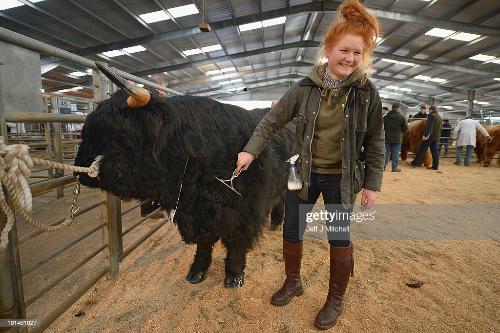 Jordan Hedsbeth prepares a Highland bull as it stands tethered during the 122nd Highland Cattle Society spring sale at Oban Livestock centre on February 11, 2013 in Oban, Scotland. The show and sale held over two day's is open to all highland breed enthusiasts, attracting many buyers from across Europe and North America.