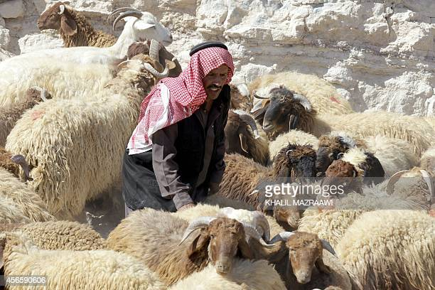 A Jordanian merchant gathers his sheep at a livestock market in Amman October 3 on the eve of the Muslim holiday of Eid alAdha or Feast of the...