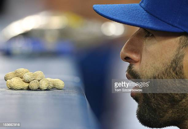 Jose Bautista of the Toronto Blue Jays looks on with a handful of peanuts before him during MLB game action against the Minnesota Twins on October 2...
