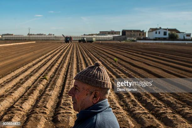 Jose Biot a retired farmer looks into the distance beside a plot of land of 'chufas' being farmed by tractors on January 18 2016 in Valencia Spain...