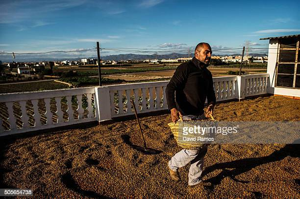 Jose Francisco Mari dries 'chufas' on the roof of his house on January 18 2016 in Valencia Spain According to the Valencia's Tiger Nut Regulatory...