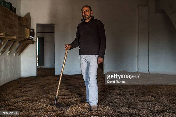 Jose Francisco Mari poses for a portrait on 'chufas' being dried at his house on January 18 2016 in Valencia Spain According to the Valencia's Tiger...