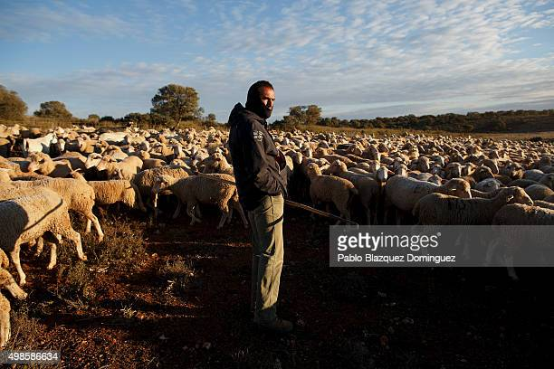 Jose Ramon Lahoz checks the sheep herd before they start another walk along the Canada Real Conquense o de los Serranos on November 22 2015 near...
