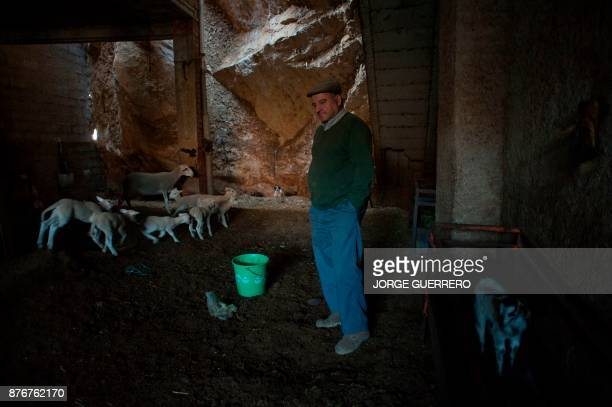 Jose Tello stands by his sheep whose grazing is affected by drought in Albanchez de Magina near Jaen on November 20 2017 Spain and Portugal are...