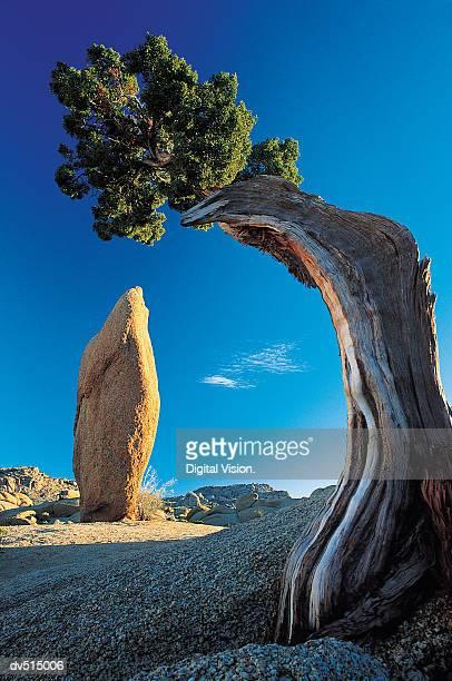 Joshua National Park, Utah, USA