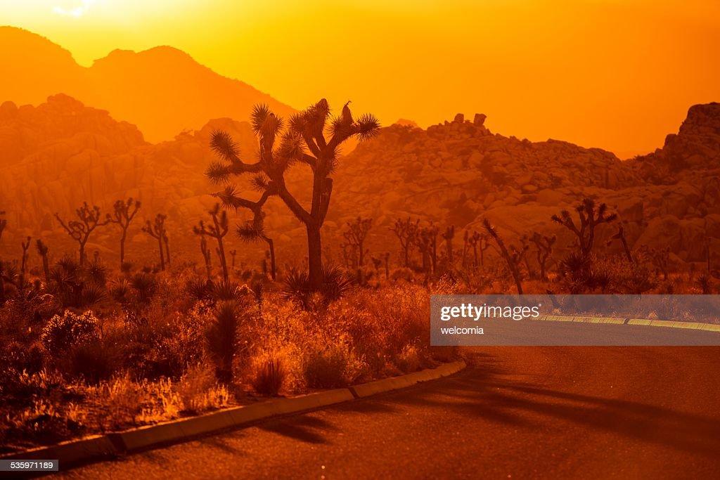 Joshua Tree California Scenery : Stock Photo